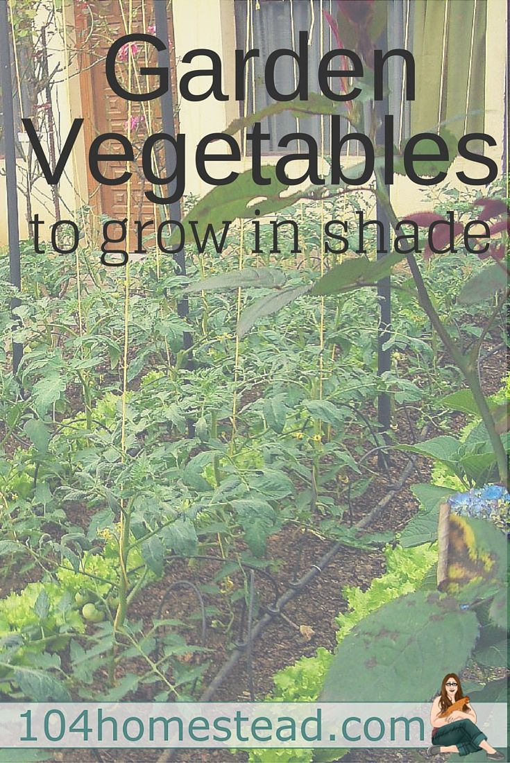 Garden Vegetables to grow in the shade