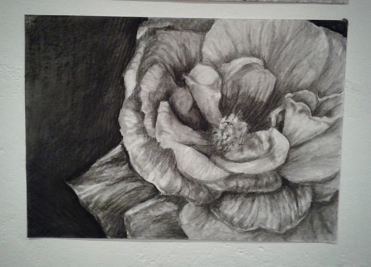Charcoal Flowers. Stace Scallan
