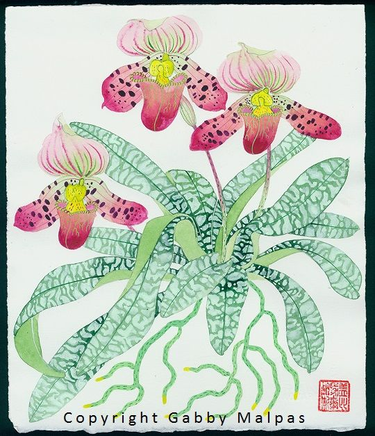 red slipper orchids - with a lot of artistic license