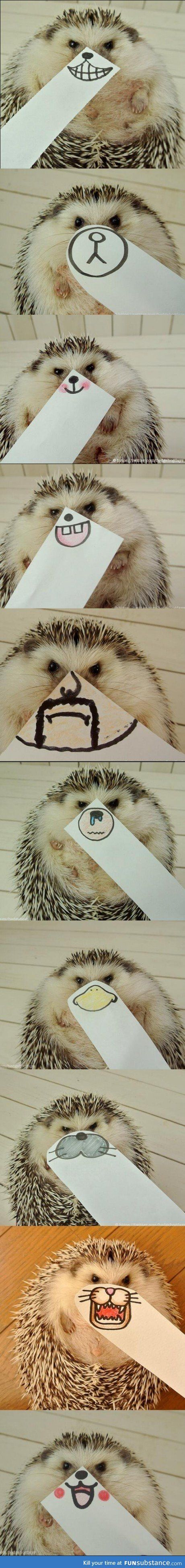 Hedgehog- why is this so funny