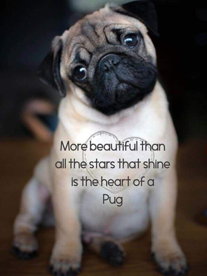 I Miss You Tinkerbell Pugs Pugs Funny Cute Pugs