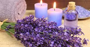 Výsledok vyhľadávania obrázkov pre dopyt lavender