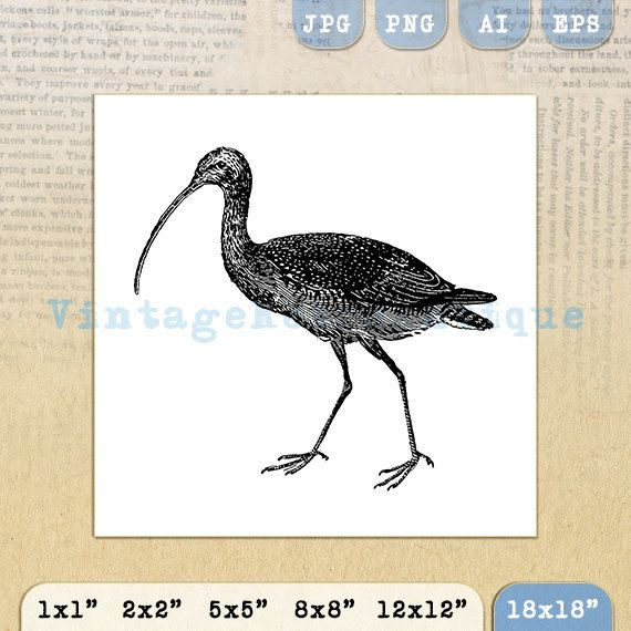 Digital Curlew Bird Image Printable Bird by VintageRetroAntique @ VintageRetroAntique.Etsy.com