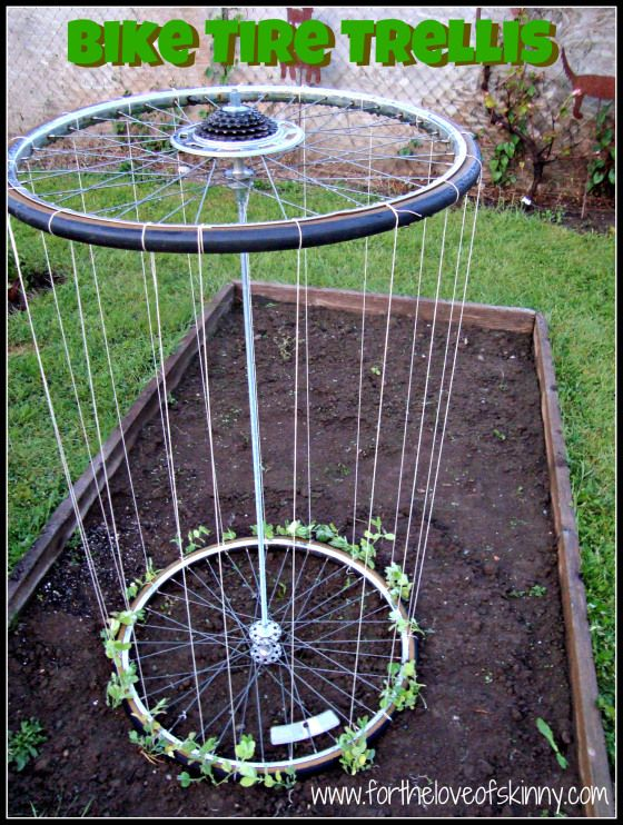 What a GREAT idea!!!  A Recycled Bike Tire trellis!!!  You could plant any running plant and have them run up the trellis for ease in picking!!!  Instructions are included!!!  -- Similar to one I posted with just the rims but this one keeps the tires on.