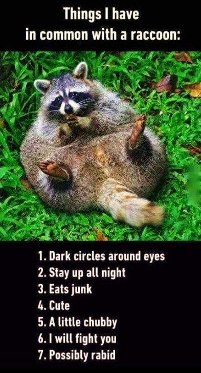 I'm pretty much just a fat little raccoon...   ~~  Houston Foodlovers Book Club