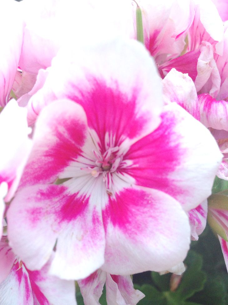 #Flowers #Photography , flores, fiori, floeurs, fashion blogger nature photos, the fashionamy, immagini ispirazione, natura, rose, roses, italian lifestyle blog  #photography #flowers #style #lifestyle #nature #blossoms #blossom #flower #petals #blogger #romantic #spring #summer #countryside #colors #colorful