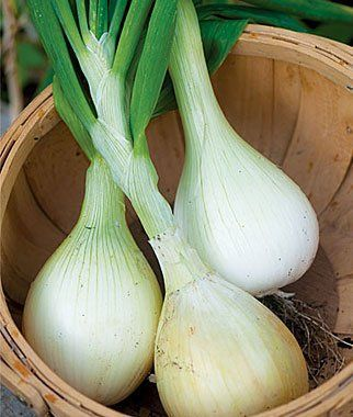 10 Vegetables to Grow in the Fall gardening