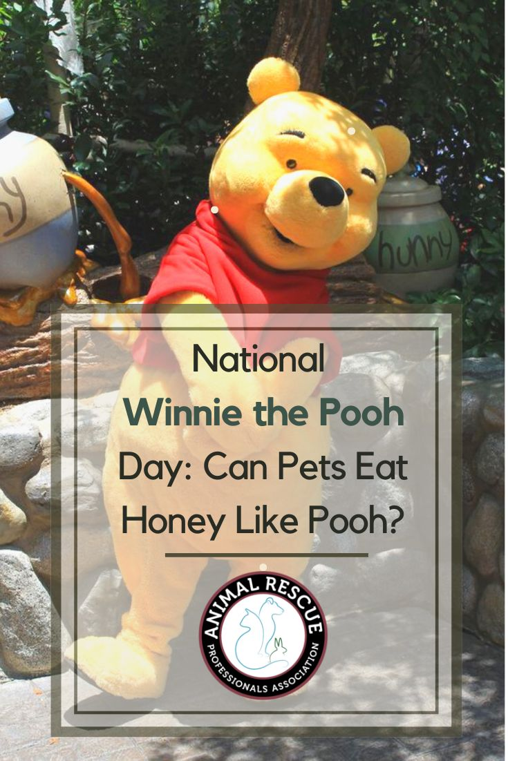 National Winnie the Pooh Day Can Pets Eat Honey Like Pooh