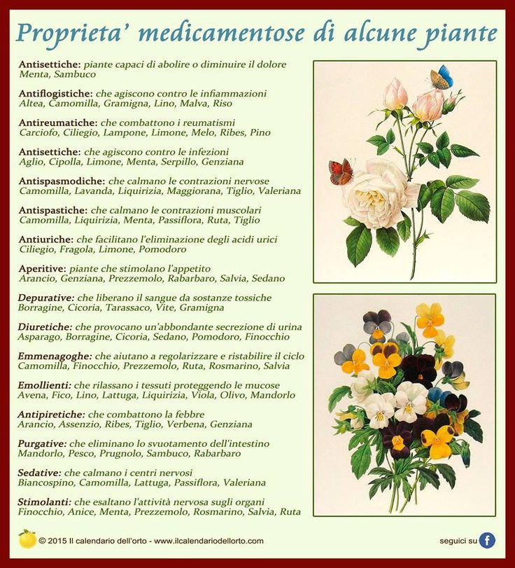Proprietà medicamentose di alcune piante