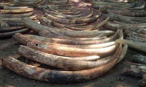 Leading ivory trade investigator killed in Kenya Latest News