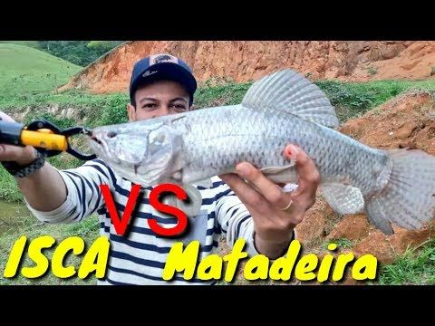 Como pescar Traíra em Lagoa isca Matadeira https://youtu.be/Fop9N1tKKtI #Traira #Fishing  #Fish #Pescaria #Pesca #Traíra  #trairão