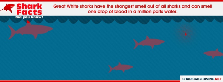 Great White Sharks have the strongest smell of all sharks and can smell one drop of blood in a million parts water