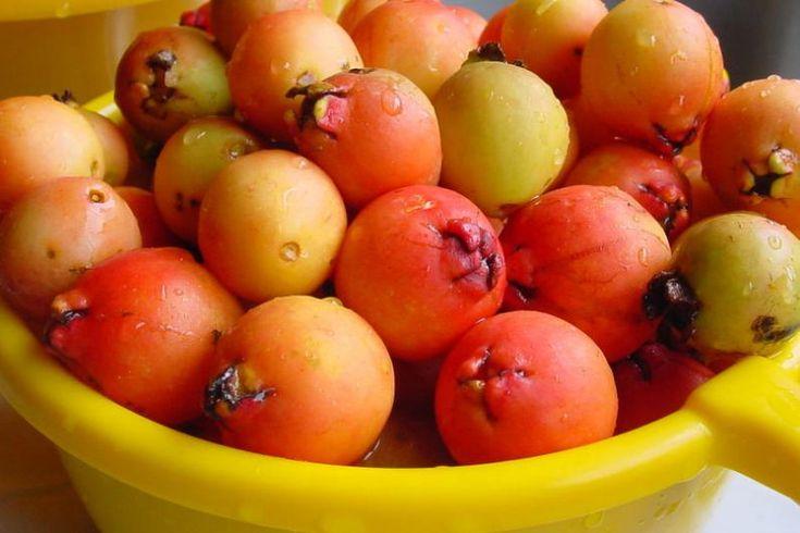 Araçá: O fruto que tem olhos!