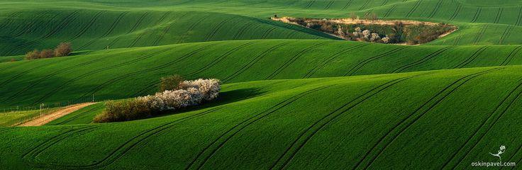 #188. The green carpet. Moravia. Czechia - http://www.oskinpavel.com/