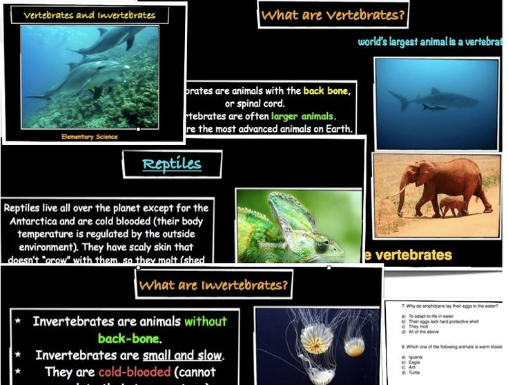 venn diagram of reptiles and amphibians electrical lighting wiring diagrams the 25+ best vertebrates invertebrates ideas on pinterest | vertebrates, classification ...