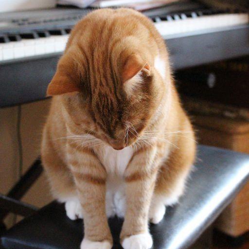 Katte og forstoppelse