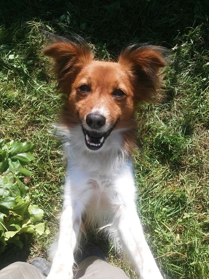 My happy dog
