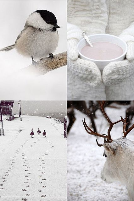 go for a long stroll in winterwonderland... nature at its best! winter white by the style files, via Flickr