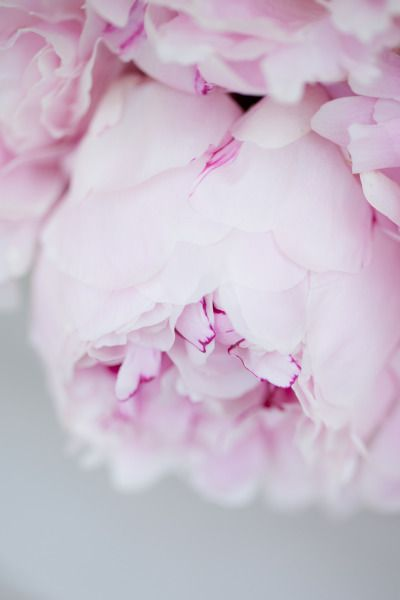 #peony pink... http://rstyle.me/n/j86m8nqmn                                                                                                                                                                                 More