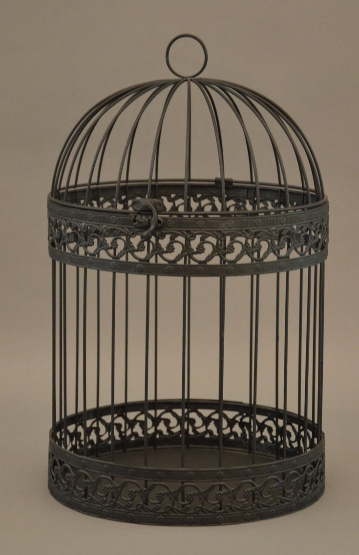The Importance of Choosing the Perfect Bird Cage