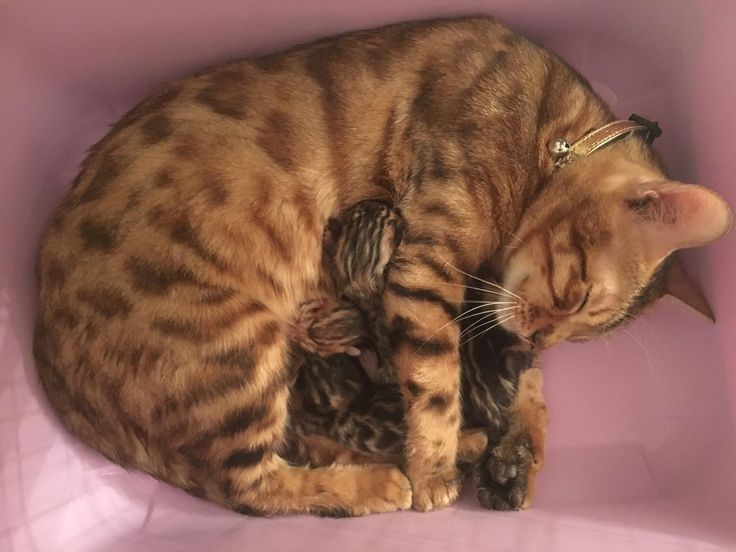 My cat and her newborn kittens - Tap the link now to see all of our cool cat collections!