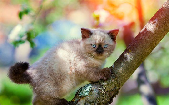 Download wallpapers Balinese Cat, 4k, kitten, cats, cute animals, pets, cute cat, Balinese