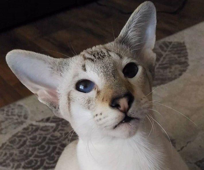 70 Best Korean Cat Names Cat Names Cats Cat Love Quotes