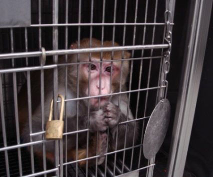 HELP STOP Air France From Shipping Monkeys to Their Deaths!   Air France continues to ship monkeys to laboratories, despite the fact that nearly every other major airline in the world has ceased sending primates on these horrific one-way flights!  Plz Sign & share!