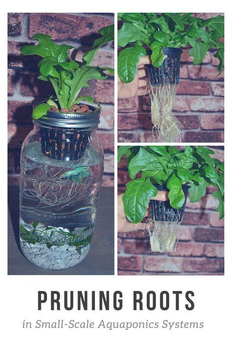 58 best indoor aquaponics images on pinterest aquaponics indoor aquaponics and indoor herb. Black Bedroom Furniture Sets. Home Design Ideas
