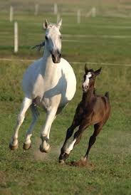 Mum & Foal Anya & Csikó