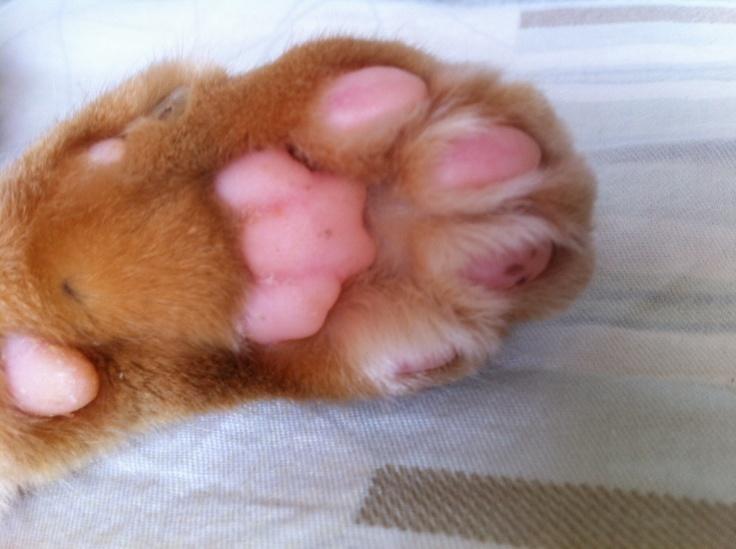 Little bear hidden in a kitten's paw.
