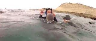 """""""O GRITO DO BICHO"""": Mergulhadores recebem visita de leões marinhos beb..."""