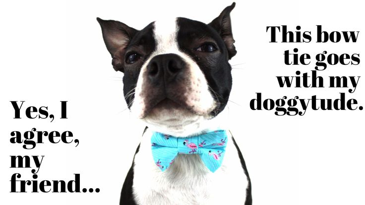 Funny Dogs, Man's Best Friends is a dog compilation with funny dog memes that prove our lives without our four-legged BFFS would be so ordinary. Enjoy the video!