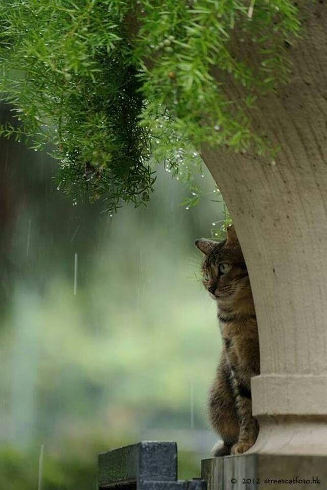 Cat in the rain under plant