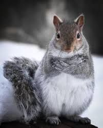 """What do you mean """"I've run out of nuts.""""???"""