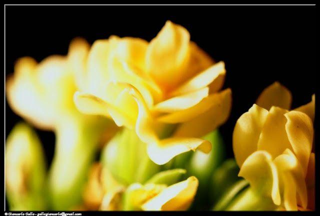 Fiori+gialli+-+photographic+processing+(343)