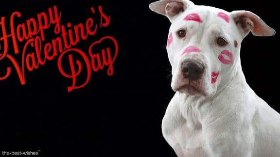 136 Good Morning Wishes My Love Images [Best Collection] | Valentines day  dog, Dog valentines, Happy valentines day images