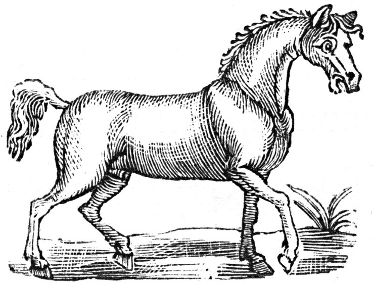 Goofy horse.  Free images from http://devilsartisan.ca/dingbats.html