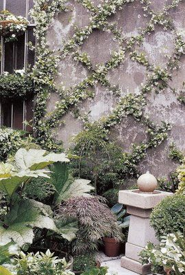 jasmine + criss cross trellis = pretty fix for bare wall....did this exact thing!  Recommend to leave about a 1 foot edge from top if creating on a wall that has eaves above it so the vines can be managed better.