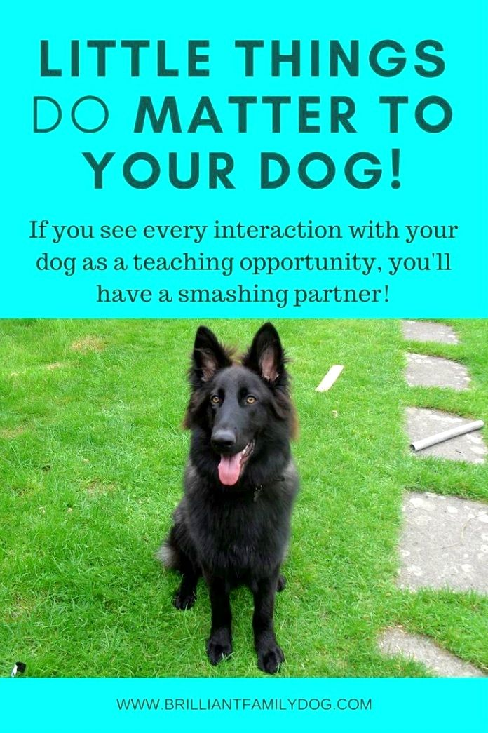 Dog Training Hacks Use A Steady And Commanding Tone When You Find