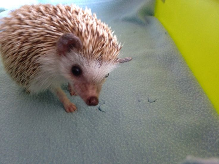 1000 Images About Page Two Attic On Pinterest Hedgehog