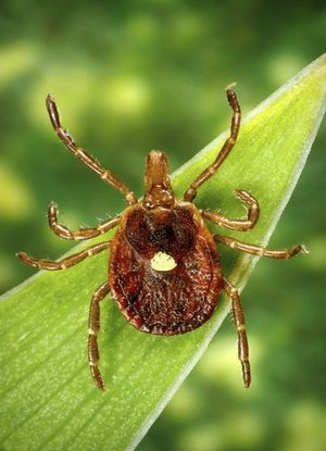 Alpha-gal allergy-Lone star tick linked to red-meat allergies in Oklahoma - Tulsa World Pork, beef, lamb, rabbit, goat, bison — it's all off-limits if you are allergic. So are foods that contain gelatin, lard, whey protein or are fried with lard or bacon grease, or cross-contaminated when cooked on the same grill as red meat.