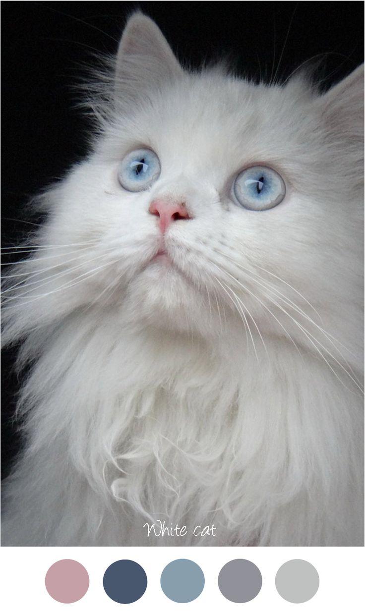 Meer dan 1000 ideeën over Blauwe Verf Kleuren op Pinterest ...
