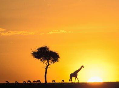 An African Safari!
