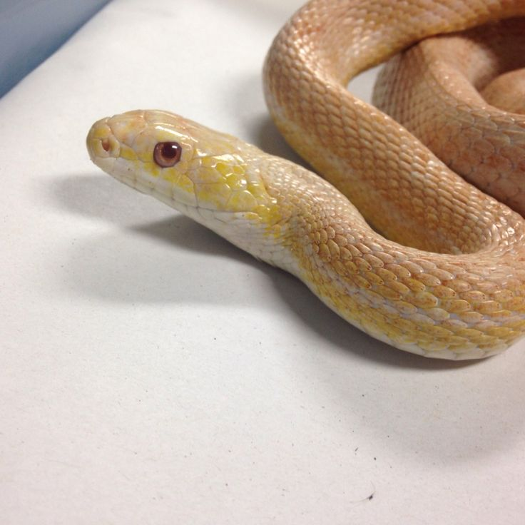 We supply high quality captive bred reptiles and exotics equipment food and complete setups Open 7 days a week in central Cardiff with an online store and UK wide