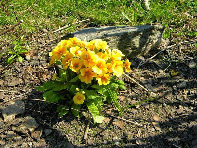 NAŠE ZAHRADY: Počítáme Jaro! Jarní slunce a rozkvetlé květy. Prv...