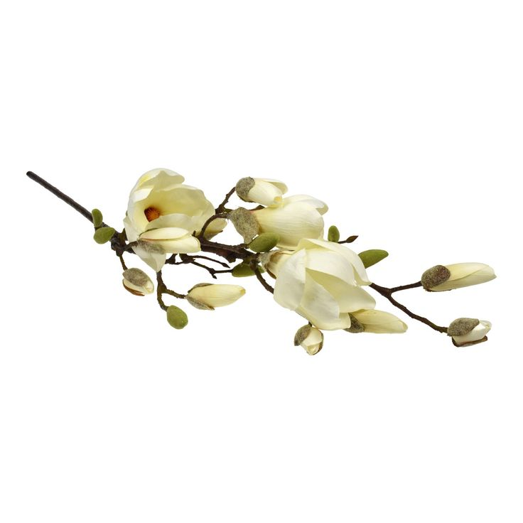 Large Magnolia Tree Branch. This magnolia comes in two lengths and is breathtaking in its simplicity and effect.