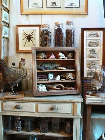 Petite Chine Et Cie: Cabinet(S) De Curiosité(S). Curio CabinetsCabinet Of  CuriositiesNatural ...