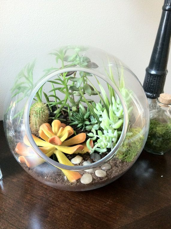 large round glass air plant succulent moss cactus. Black Bedroom Furniture Sets. Home Design Ideas