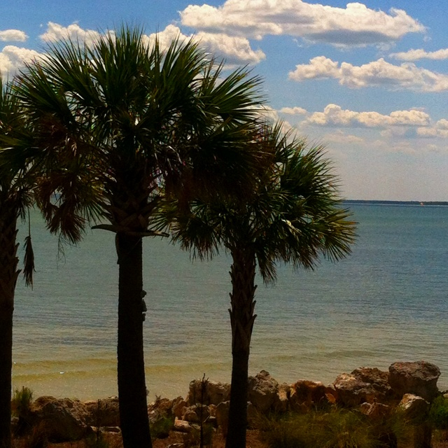 Panhandle Beach House Rentals: 88 Best Images About Alligator Point Beach _ Bald Point